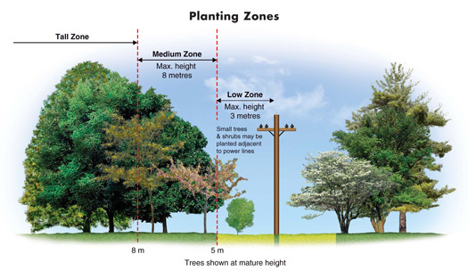 Diagram: Planting Zone