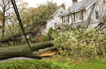 photo of a fallen tree on a house