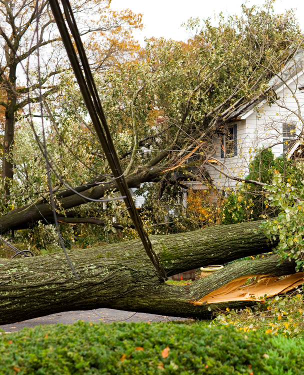 photo of a fallen tree near a house