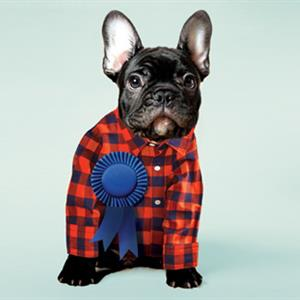 image of pepper the french bulldog in a flannel jacket
